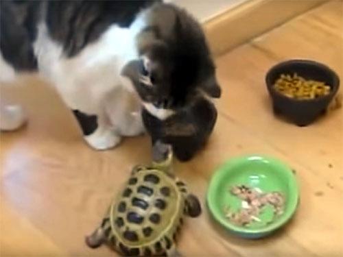 餌場の番人のつもり? 猫たちを追い払うカメ