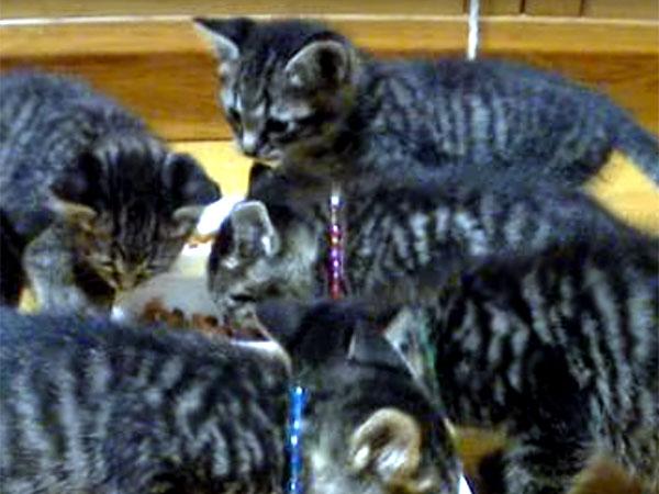 「うまい♪ うまい♪」ご飯を食べながら鳴く子猫たちの大合唱。夢中で食べている姿が可愛い!