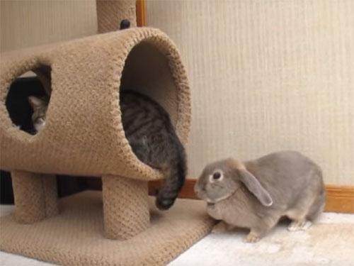 「遊ぼうよ~♪」と誘うウサギを、尻尾でビシバシ叩く猫