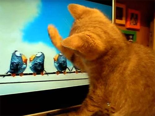 「こうしてやるにゃ!」子猫が猫パンチ以上の技を繰り出した!