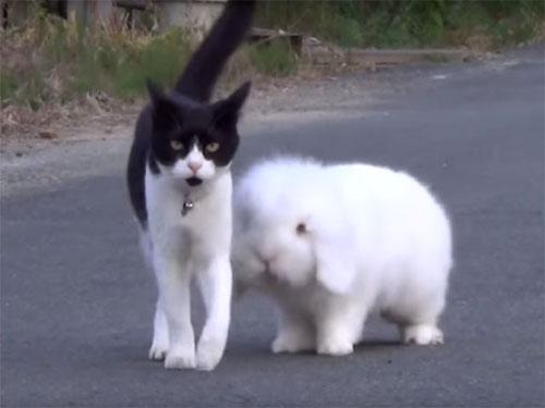きょうだいみたい♪ 仲良く散歩する猫とウサギ