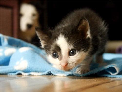 世界中から感動の声! 子猫の面倒を見るワンちゃんたち♪