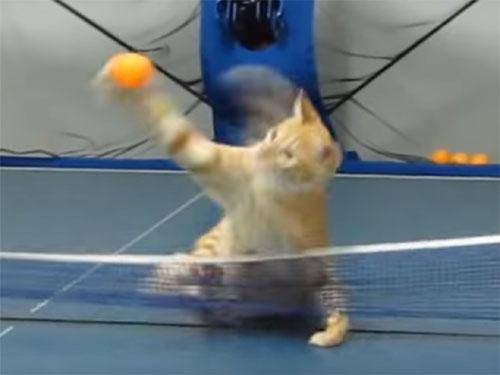 天才卓球ネコ現る! 脅威のスマッシュで打ち返す!