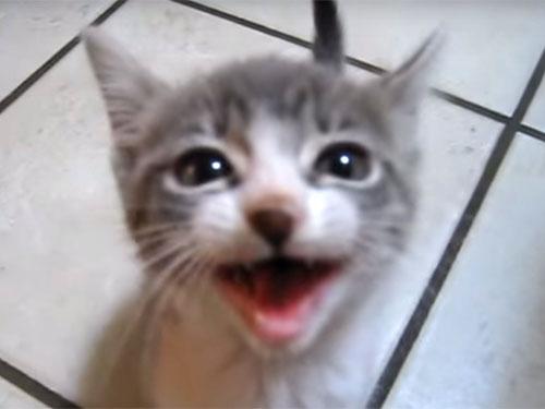 可愛すぎ! 子猫が超長~い鳴き声で訴えています♪