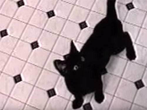 忍者のような黒猫♪ トラップを軽く突破して、ご馳走を食べる!
