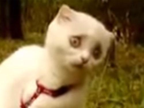 草をかじっていた子猫に異変? 「変顔」の殿堂入り爆笑動画!