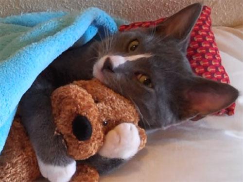 子猫がテディベアのぬいぐるみを、ぎゅっ!とハグして寝ています♪