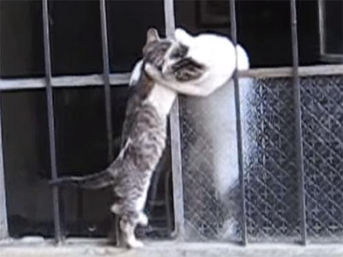 子猫の鳴き声に駆け付ける母猫の愛情 「ママ~! おうちに入れて」