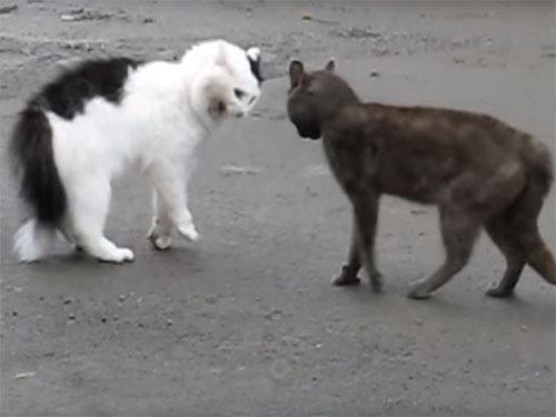 見事な逆転劇! 上品な猫の猛反撃に、たじろいで逃げる野良猫