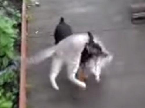 「しっかりつかまってワン!」」猫を運ぶワンちゃんタクシー