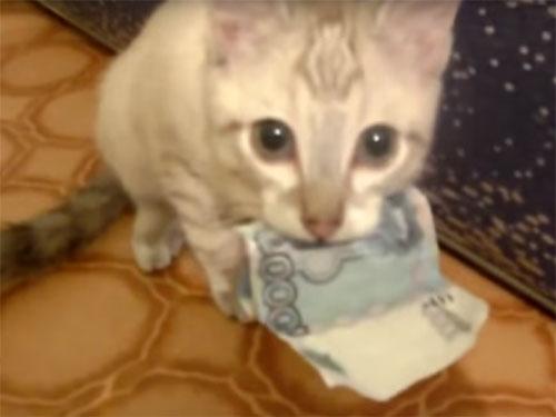 「ぼくのお金ニャ!」可愛い子猫が、お札をくわえて離さない!