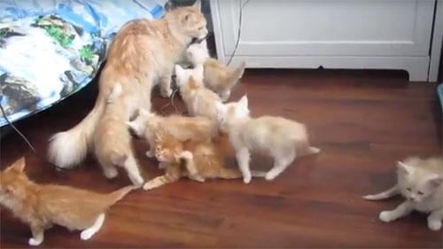 猫の大家族♪ でも突然の大パニックで一気に解散…!?