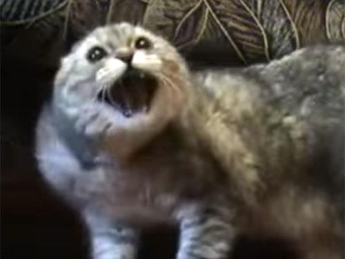 「ハンニャラニャンニャンニャ~」猫が呪文を唱えて反撃に出る!