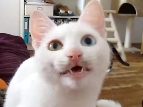 「そこにいるのは何者ニャ!」白猫がカチカチと歯を鳴らして怒っています♪