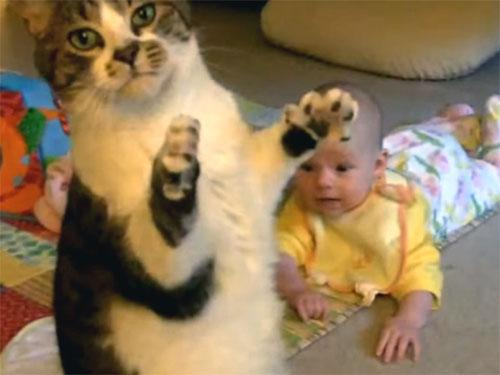 猫と人間の赤ちゃん、あやし方が分からず戸惑う猫