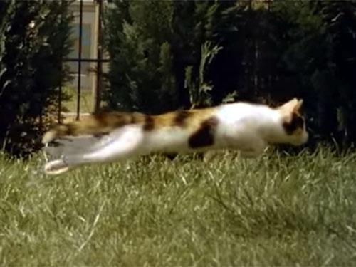 子猫の美しく、しなやかな動きに感動! 高解像度の超スローモーション動画