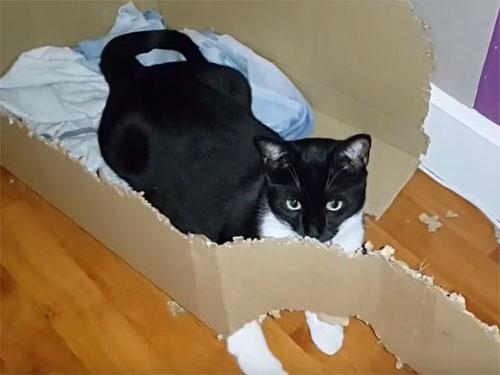 継続は力にゃり! 猫が3か月かけてダンボール箱を丸ごと解体!