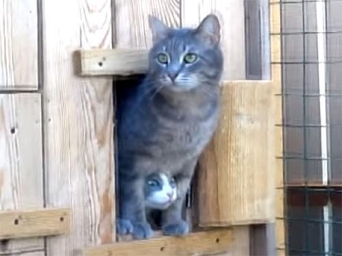 股の間から、猫さんが「こにゃにゃちわー♪」