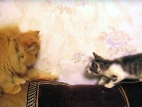 成猫に徴する子猫!