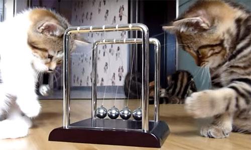 子猫たちのカチカチボール遊び1