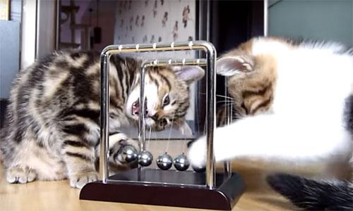 子猫たちのカチカチボール遊び♪ 見ているだけで楽しい!