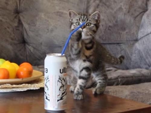 ストローを見つけた子猫