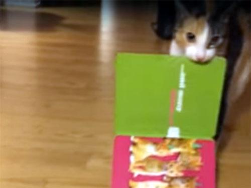 クリスマスカードを持ち去る三毛猫2