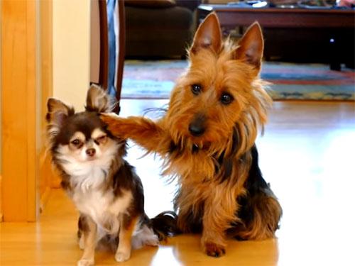 叱られて罪をなすりつける犬2