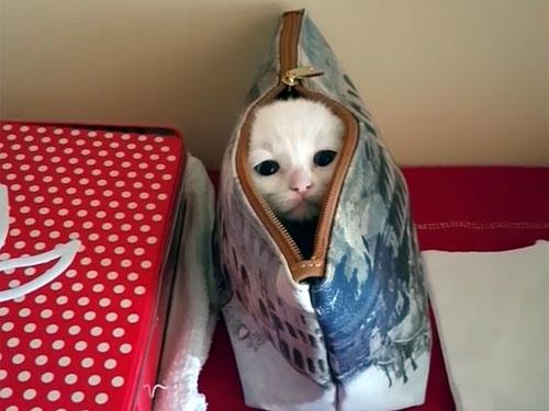 ポーチに隠れて遊ぶ子猫1
