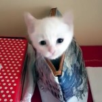 白猫の子猫が、ポーチで隠れん坊♪ 顔を出す仕草が可愛い!