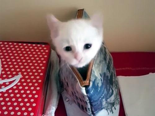 ポーチに隠れて遊ぶ子猫2