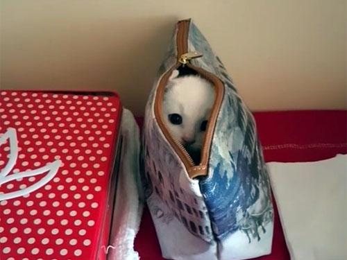 ポーチに隠れて遊ぶ子猫3