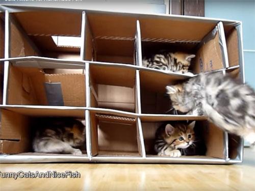 手作りダンボールハウスに喜ぶ子猫たち1