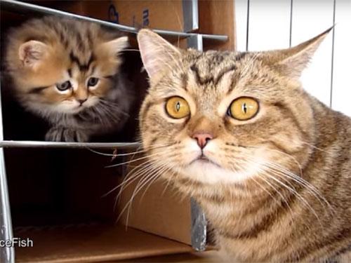 手作りダンボールハウスに喜ぶ子猫たち2
