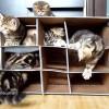 手作りダンボールハウスに、子猫たちが大喜び! 「楽しいニャ」
