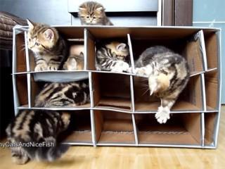 これは楽しそう! 手作りダンボールハウスで遊ぶ子猫たち♪