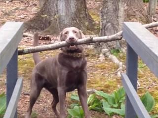 木の棒をくわえた犬が「橋を通れないわん!」  さあ、どうする?