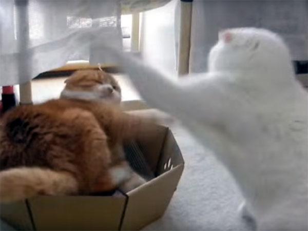 猫パンチを繰り出す白猫