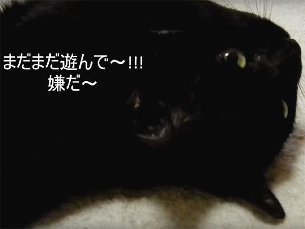 遊びを止めると、猛烈に抗議する黒猫1