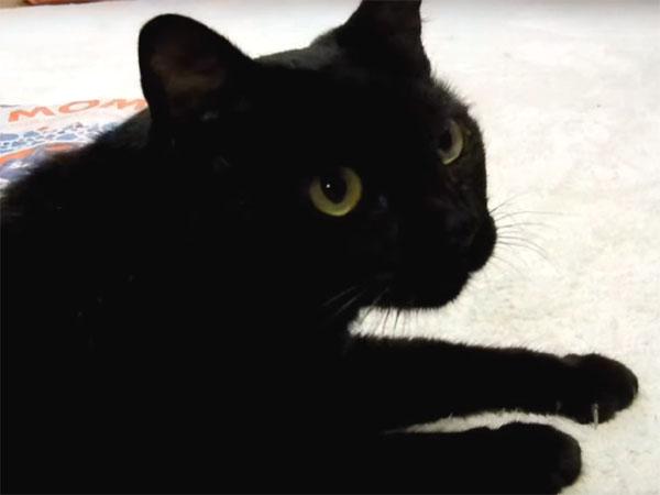 遊びを止めると、猛烈に抗議する黒猫2