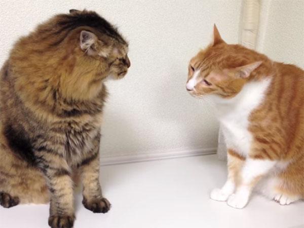 長~い猫パンチ合戦1
