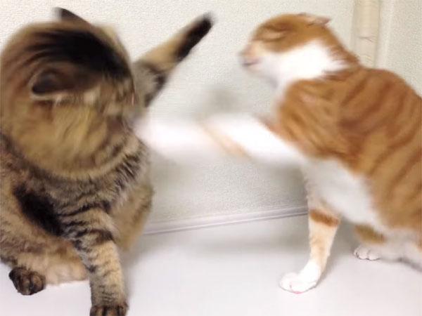 長~い猫パンチ合戦2