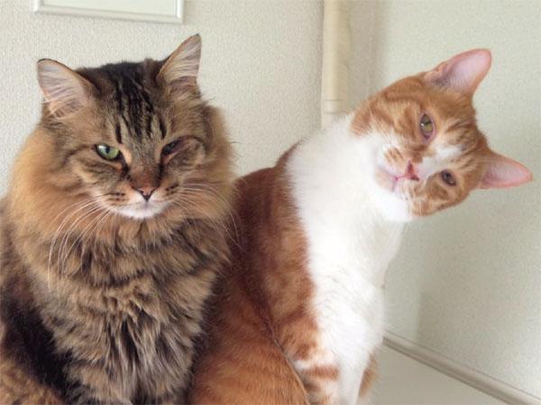 長~い猫パンチ合戦の後の二匹