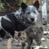 身体の不自由な子猫に、優しく接するワンちゃん♪ 癒し動画