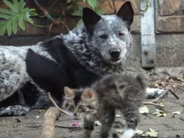 身体の不自由な子猫に、優しく接する犬♪