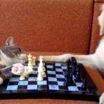 猫と犬がチェスで勝負!「猫さん、やる気あるの? 」