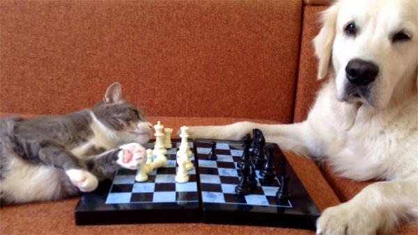 猫 VS 犬、チェスで勝負1