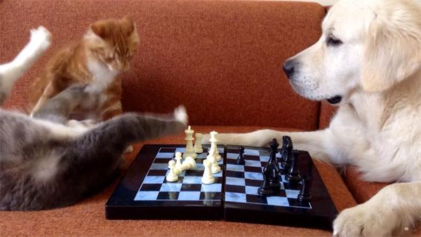 猫 VS 犬、チェスで勝負2