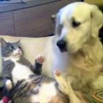「何してるワン!」 猫が図々しく犬を枕にして寝ていたら、やっぱり怒られちゃったニャ(笑)