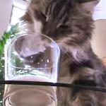 猫がコップのミルクを、器用にお手々で飲んでいます♪